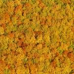 Flugaufnahme Paul Plutsch Herbstwald von oben
